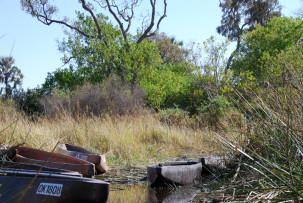 Mit den Mokoros durch das Okavangodelta