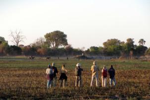 Pirschwanderung durch das Okavangodelta