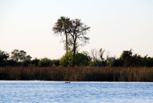 okavangodeHippo-Teich im Okavangodeltalta-hippoteich_01