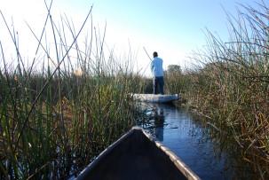 Mokoro-Fahrt durch das Schilf im Okavangodelta