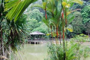 Botanischer Garten in Singapur - Symphony Lake mit Lippenstiftpalme