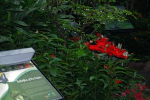 Changi Airport Singapur - Butterfly Garden