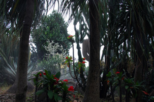 Changi Airport Singapur - Cactus Garden