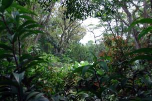 Foliage Garden in Singapur