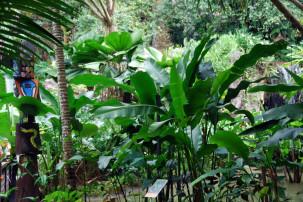 Ginger Garden in Singapur