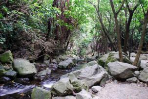 Ohau Stream Walk