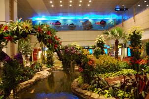 Changi Airport Singapur - Orchid Garden
