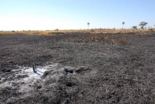 Nach einem Buschbrand im Okavangodelta