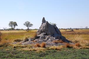 Termitenhügel im Okavangodelta