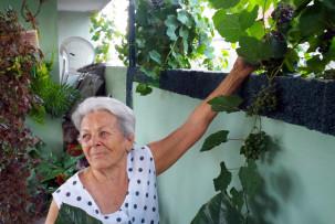 Weintrauben pflücken mit der Abuela
