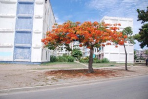 santiago-de-cuba-bemalte-haeuser-03