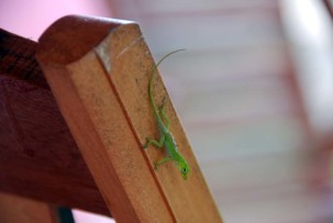 Besucher auf unserer Casa-Terrasse in Vinales